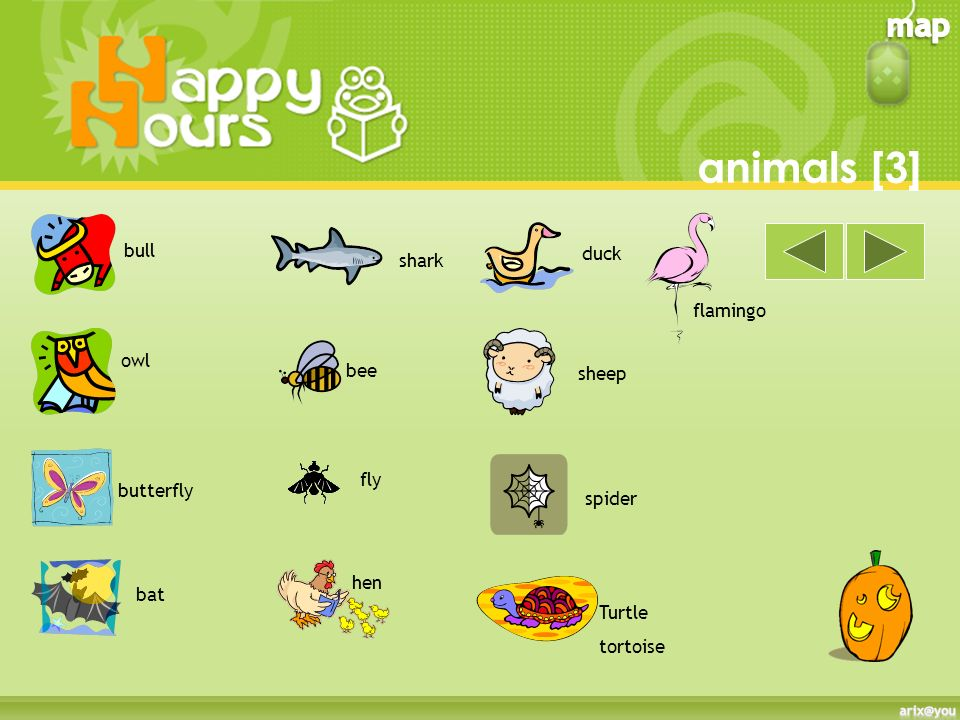 animals [3] bull duck shark flamingo owl bee sheep fly butterfly